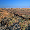 windblown beach grass on Provinceland dunes