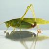 sunlit grasshopper on railing