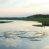 reeds in Provincetown Moors