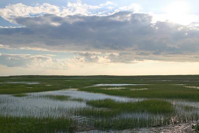 Pamet marsh