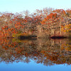 Beech Pond shore autumn 2