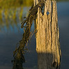 rotted post and raveled rope