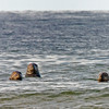 three gray seals