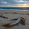driftwood and sunset surf