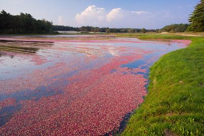 cranberry bog SE Mass