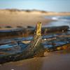 Herring Cove Beach shipwreck detail