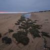 stranded seaweed Herring Cove Beach