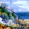 """Driftwood Decorating Chapin Beach<br /> 11"""" x 15"""" Price:$300. Framed"""