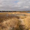 Dowses Beach