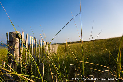 Fence and Grass Cape Cod