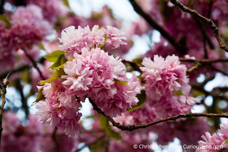 Flowers in bloom - Cape Cod