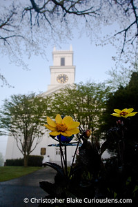 Flower and Church - Cape Cod