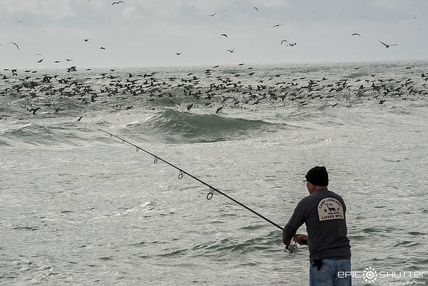 April 2, 2018, Cape Point,Cormorants, Fishing, Buxton, Hatteras Island, North Carolina, Cape Hatteras Lighthouse, Cape Hatteras National Seashore, Epic Shutter Photography, Outer Banks Photographers