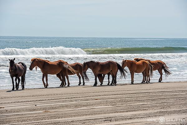 April 28, 2020 Wild Horse 4x4 Beach, Epic Shutter Photography