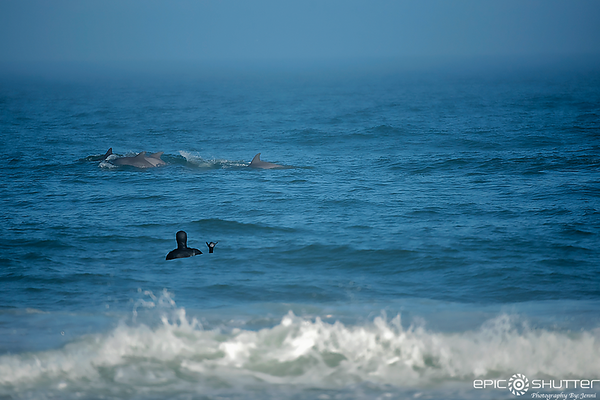 February 20, 2018, Dolphins, Surfing, Buxton, Cape Hatteras National Seashore, Epic Shutter Photography, Outer Banks Photographers, Hatteras Island Photographers, Documentary Photography