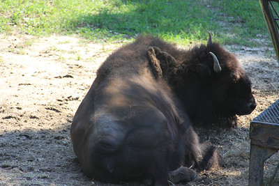 Cape May Zoo Aug 20 2011 023