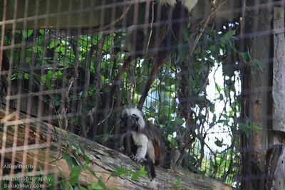 Cape May Zoo Aug 20 2011 029