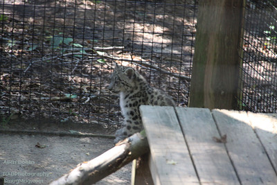 Cape May Zoo Aug 20 2011 039