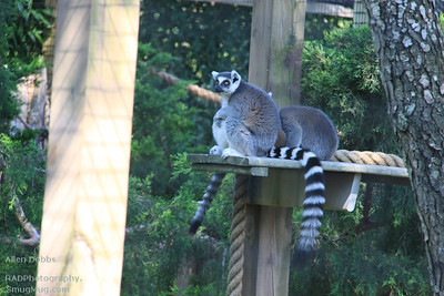 Cape May Zoo Aug 20 2011 059