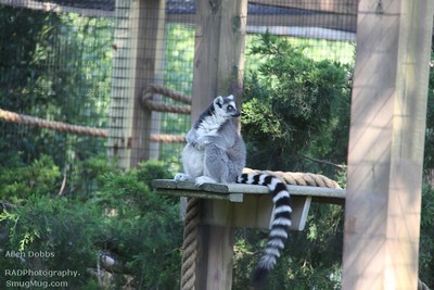Cape May Zoo Aug 20 2011 063