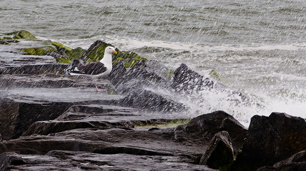 Waves splash rocks and a seagull, Cape May, New Jersey.