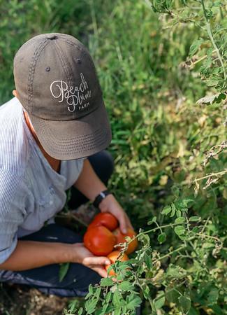 Christina tomatoes