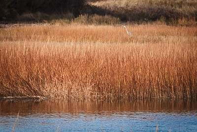 Birding in Duxbury - 15 November 2013
