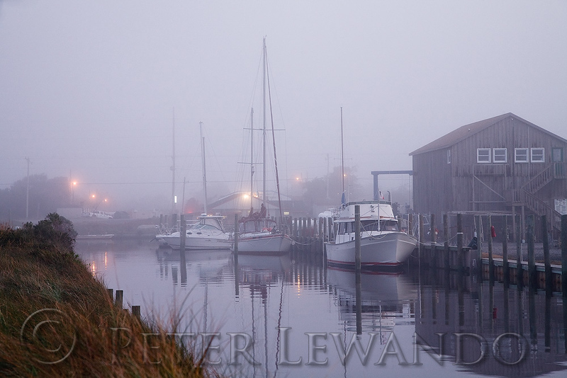 Foggy Harbor