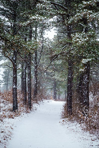 Winter Hike at the Albany Pine Bush