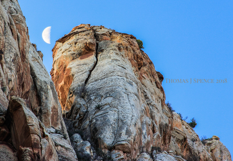 Moonset in Capitol Gorge at morning light