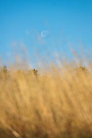 Soquel, grass & moon