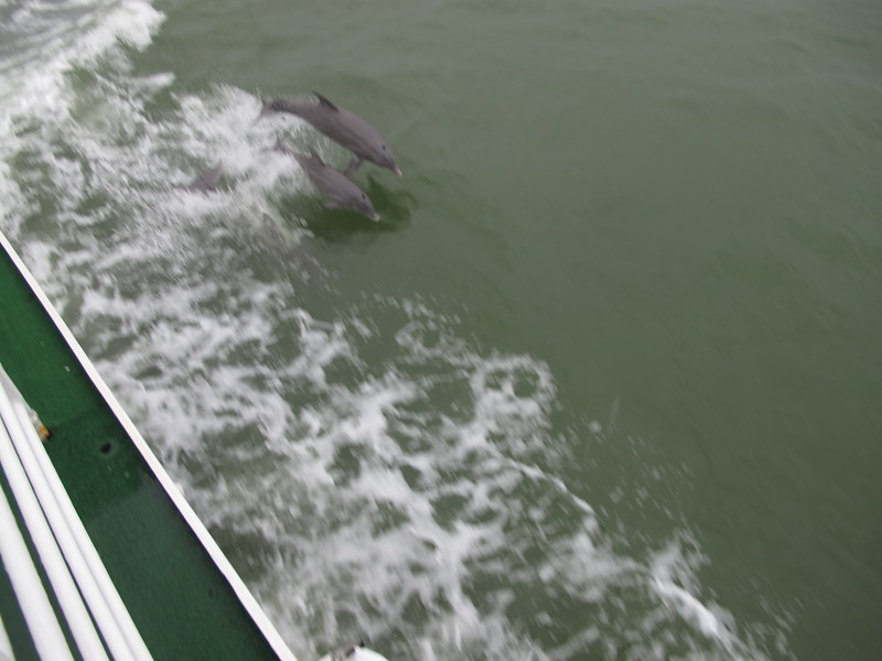 Bottle-nosed dolphins - amazing mammals.