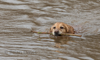 Fetch the stick
