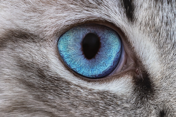 This is the eye of a beautiful stray cat we fostered while she nursed her kittens to weaning age