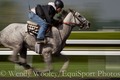 Keeneland Works in motion blur 5.04.2011ww