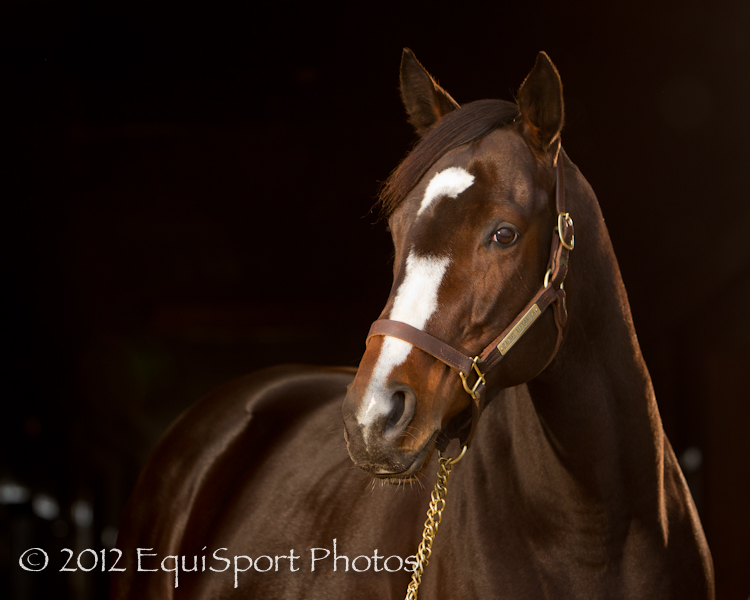 Both instructors, Matt & Wendy, are full time photographers for EquiSport Photos,  http://www.equisportphotos.com/   Full day or half day rates available.  $300 - Half Day $250/ea - Half Day (2 People) $225/ea - Half Day (3 People) $200/ea - Full day, 4-6 people (w/2 instructors)  $550 - Full Day $450/ea - Full day, 2 people $400/ea - Full day, 3 people $350/ea - Full day, 4-6 people (w/2 instructors)  Organize a few friends and give us a call! Available most weekdays, Monday-Thursday, and some weekends. 859-338-4187