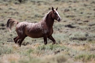 WILD HORSE    PILOT BUTTE WYOMING