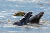 New Zealand - South Island - Catlins - Hooker Sea Lion