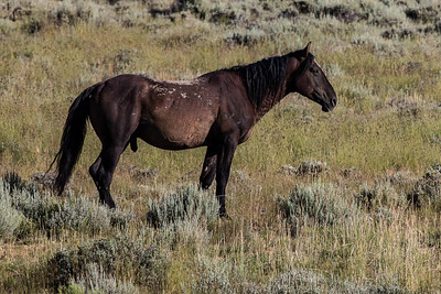 Wild Horse - Pilot Butte - Wyoming-9597