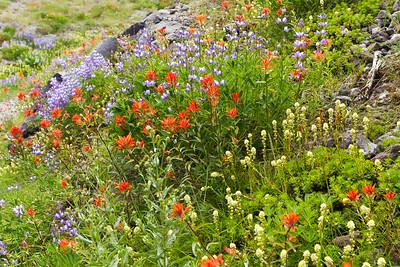 Ape Canyon Wildflowers-9188