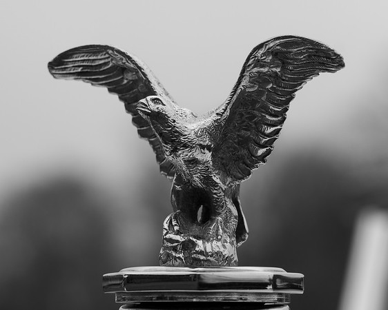 Eagle with Outstretched Wings Mascot