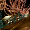 treelights_8090