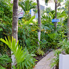 Caraibes Bonheur Footpath