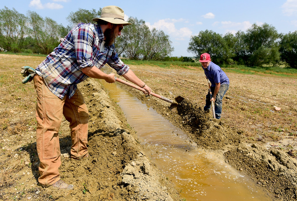 . LONGMONT, CO - AUGUST 7: From left: Farmhand Kris Korba and Farm Manager Marcus McCauley work on irrigation ditches at the McCauley Family Farm near Longmont on Aug. 7, 2018. Carbon farming is a practice in which farmers and ranchers aim to be carbon neutral. (Photo by Matthew Jonas/Staff Photographer)