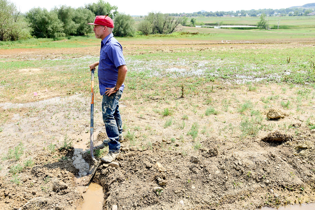 . LONGMONT, CO - AUGUST 7: Farm Manager Marcus McCauley stands in a field he is rehabilitating on Aug. 7, 2018. The open space property is next to the McCauley Family Farm near Longmont and is part of a pilot program for carbon farming. Carbon farming is a practice in which farmers and ranchers aim to be carbon neutral. (Photo by Matthew Jonas/Staff Photographer)