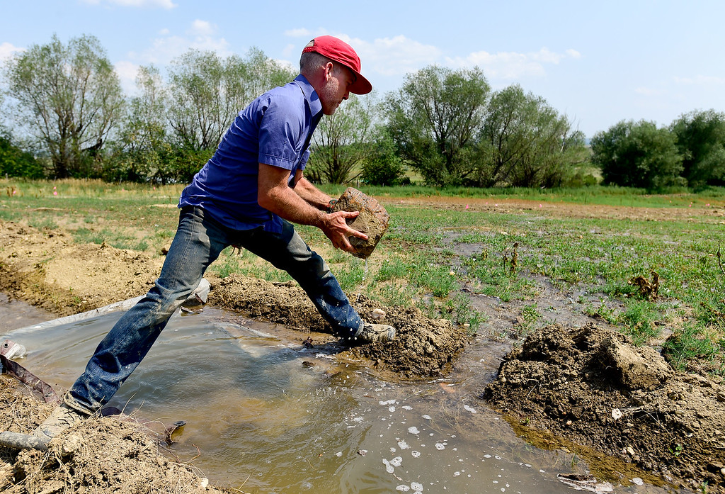 . LONGMONT, CO - AUGUST 7: Farm Manager Marcus McCauley removes a rock from a temporary dam on an irrigation ditch on a property he is rehabilitating on Aug. 7, 2018. The open space property is next to the McCauley Family Farm near Longmont and is part of a pilot program for carbon farming. Carbon farming is a practice in which farmers and ranchers aim to be carbon neutral. (Photo by Matthew Jonas/Staff Photographer)