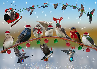 Swallows Christmas