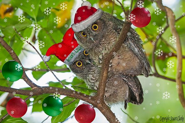 Screech Christmas