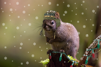 Squirrel Toque
