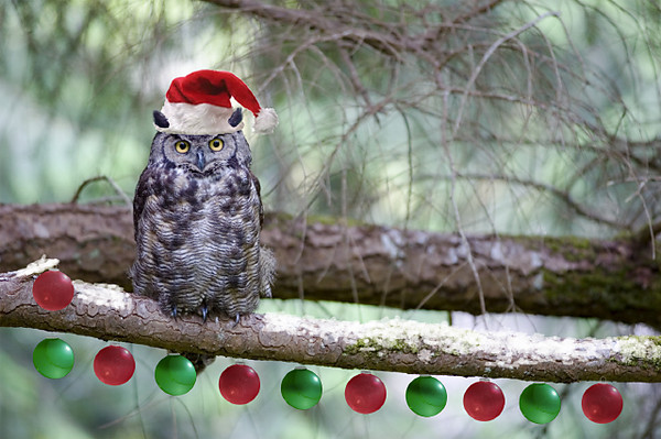 Great Horned Christmas